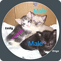 Adopt A Pet :: ONYX AND EMILY - Malvern, AR