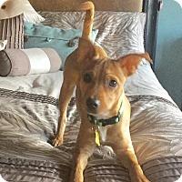 Adopt A Pet :: Kai - Salt Lake City, UT
