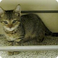 Adopt A Pet :: Moe - Georgetown, TX