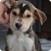 Adopt A Pet :: Meeko - Danbury, CT