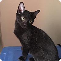 Adopt A Pet :: Binx - Jerseyville, IL