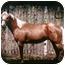 Photo 1 - Quarterhorse for adoption in Pueblo, Colorado - Cat