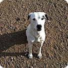 Adopt A Pet :: Bella Donna