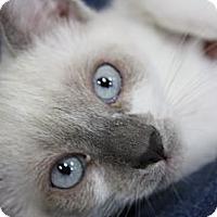 Adopt A Pet :: Dulce - Santa Monica, CA