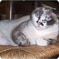 Adopt A Pet :: Sachi - Irvine, CA