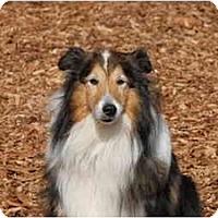 Adopt A Pet :: Zepher - Ft. Myers, FL