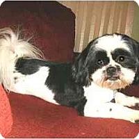 Adopt A Pet :: Gucci - Mooy, AL
