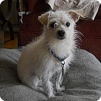Adopt A Pet :: Snuggles - Charlotte, NC