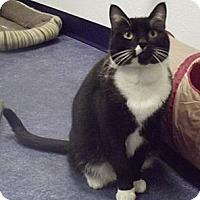 Adopt A Pet :: Moses - Colorado Springs, CO