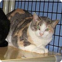 Adopt A Pet :: Barn Cats - Flower - Colmar, PA