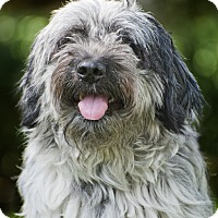 Adopt A Pet :: Russell - Houston, TX