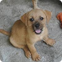 Adopt A Pet :: Heidi-meet me 8/28 - East Hartford, CT