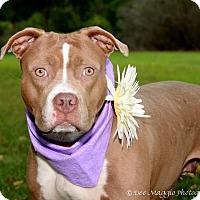 Adopt A Pet :: Lola - Davison, MI