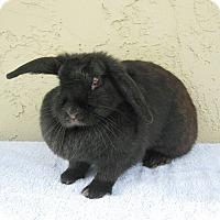 Adopt A Pet :: Cupcake - Bonita, CA