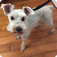 Adopt A Pet :: Opal - Redondo Beach, CA