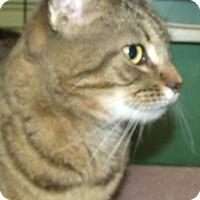 Adopt A Pet :: REESE - Acme, PA