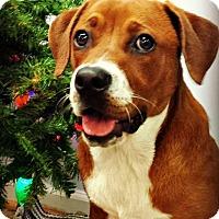 Adopt A Pet :: Dusty - Kimberton, PA