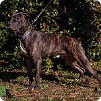 Adopt A Pet :: Bert - Savannah, GA