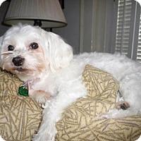 Adopt A Pet :: Foofie*Adopted - Atlanta, GA