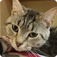 Adopt A Pet :: Wilda - Grayslake, IL