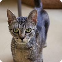 Adopt A Pet :: Nikki - Chula Vista, CA