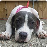 Adopt A Pet :: Ariella - Baton Rouge, LA