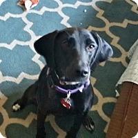 Adopt A Pet :: Judge Judy - Grafton, WI