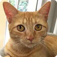 Adopt A Pet :: Misdeed - Norwalk, CT