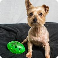 Adopt A Pet :: Bridgette - Seminole, FL