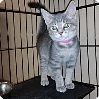 Adopt A Pet :: Twix - Cumming, GA