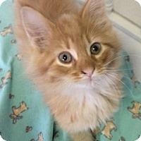 Adopt A Pet :: Lucas - White Cloud, MI