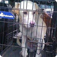 Adopt A Pet :: Franco - Wytheville, VA