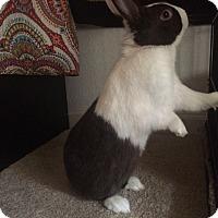 Adopt A Pet :: Chunk - Williston, FL