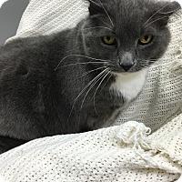 Adopt A Pet :: Tippy Toes - Paducah, KY