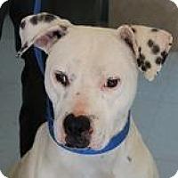 Adopt A Pet :: Buddy - Peace Dale, RI