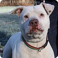 Adopt A Pet :: Reba - Bardonia, NY