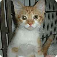 Adopt A Pet :: Sully - Bayonne, NJ