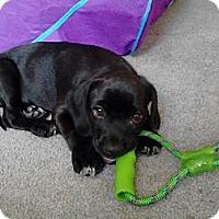 Adopt A Pet :: Willie - Alamosa, CO