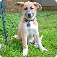 Adopt A Pet :: Ella - Austin, TX