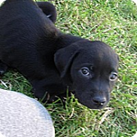 Adopt A Pet :: Twizzler - Mechanicsburg, PA