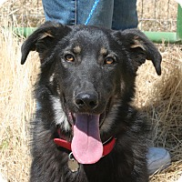 Adopt A Pet :: ROXIE *good with cats!* - Nampa, ID
