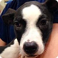 Adopt A Pet :: Columbia - Gainesville, FL