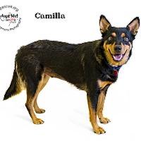 Adopt A Pet :: Camilla - Phoenix, AZ