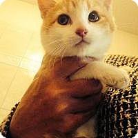 Adopt A Pet :: Chubby - Medford, NJ
