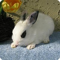 Adopt A Pet :: Fuji - Bonita, CA