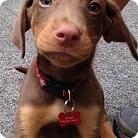 Adopt A Pet :: Woody - Bedford, VA