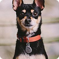 Adopt A Pet :: Sparky Beach - Portland, OR