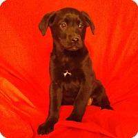 Adopt A Pet :: Delsie- ADOPTION PENDING - Hillsboro, IL