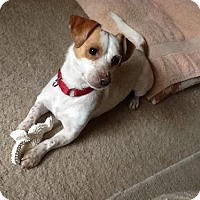 Adopt A Pet :: TOBY-precious and smart boy-S - Alvin, TX
