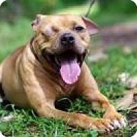 Adopt A Pet :: Sparrow - Gainesville, FL